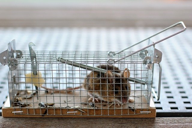 かごに入ったマウスの写真